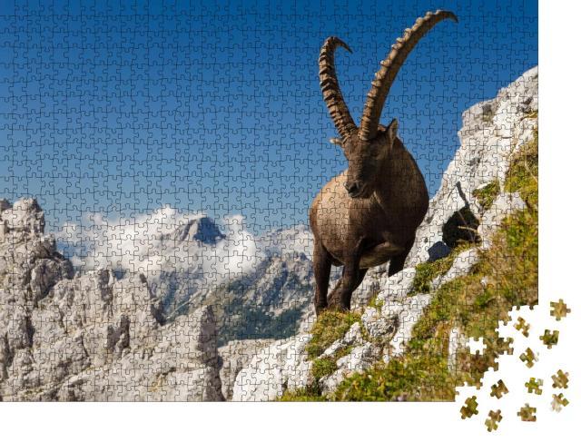 """Puzzle 1000 Teile """"Der König der Berge, Steinbock, Capra Ibex, in Sloweniens Alpen"""""""