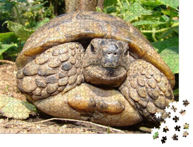 """Puzzle 1000 Teile """"Detaillierte Nahaufnahme einer Schildkröte"""""""
