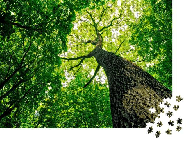 """Puzzle 1000 Teile """"Naturwald"""""""