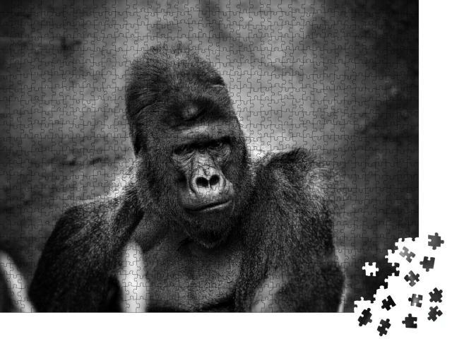 """Puzzle 1000 Teile """"Porträt eines männlichen Gorillas, schwerer Silberrücken"""""""