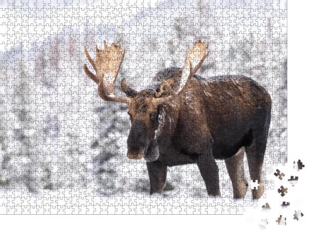 """Puzzle 1000 Teile """"Elch im Schnee in Jasper, Kanada"""""""