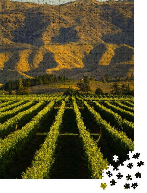 """Puzzle 1000 Teile """"Reihe von schönen Weinbergen vor Sonnenuntergang mit Berg in Blenheim, Neuseeland"""""""