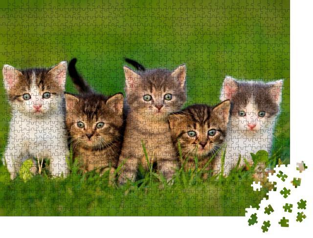 "Puzzle 1000 Teile ""Fünf neugierige Kätzchen"""
