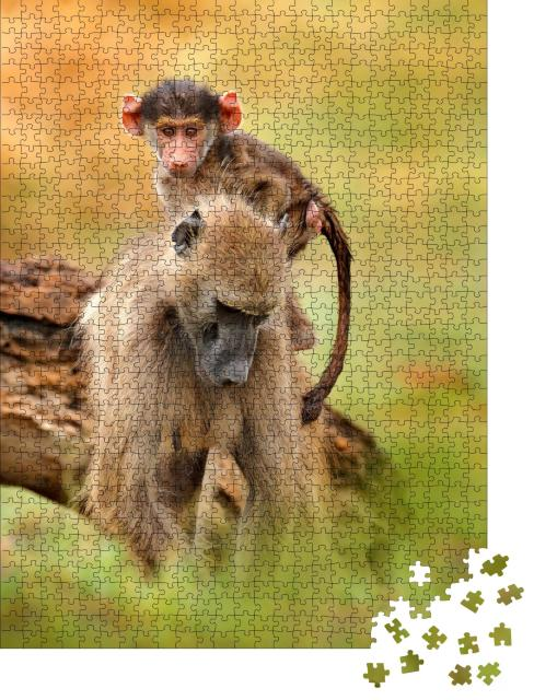"Puzzle 1000 Teile ""Chacma-Pavianweibchen mit Jungtier, Okavango-Delta, Botswana"""