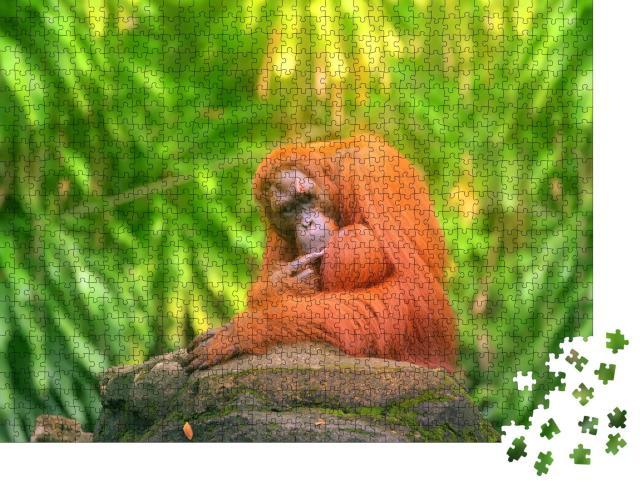 """Puzzle 1000 Teile """"Erwachsener Orang-Utan sitzend mit Dschungel als Hintergrund"""""""