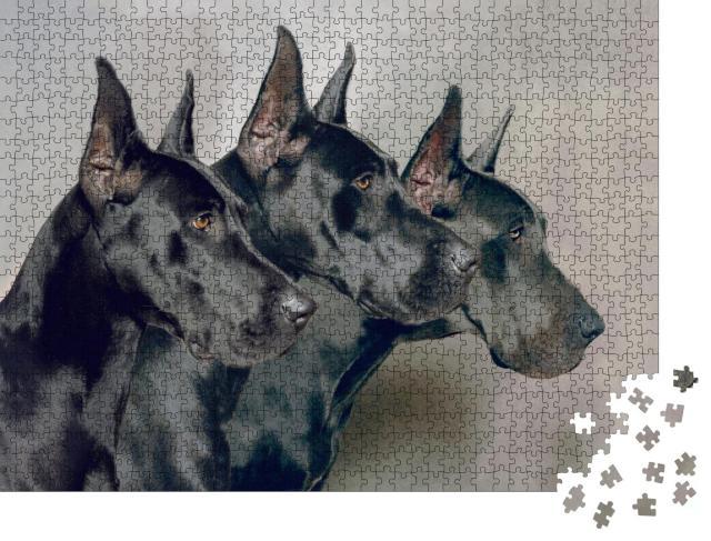 """Puzzle 1000 Teile """"Drei Generationen von Deutschen Doggen"""""""