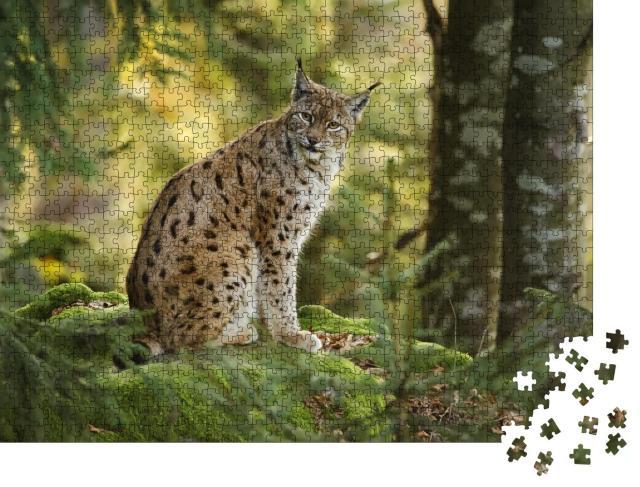 """Puzzle 1000 Teile """"Eurasischer Luchs im Nationalpark Bayerischer Wald, Deutschland"""""""