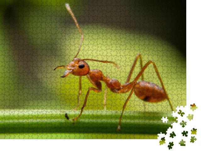 """Puzzle 1000 Teile """"Rote Ameisen suchen auf grünen Ästen, Suche nach Nahrung"""""""