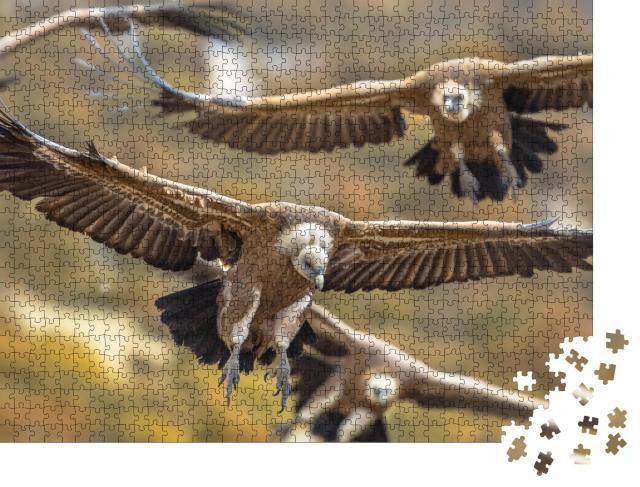 """Puzzle 1000 Teile """"Fliegende Gänsegeier in den spanischen Pyrenäen"""""""