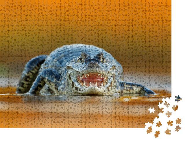 """Puzzle 1000 Teile """"Yacare Caiman, Krokodil mit offener Schnauze und großen Zähnen"""""""