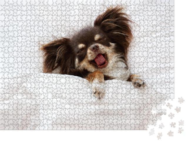 """Puzzle 1000 Teile """"Chihuahua-Hund schläft auf einem Kissen im Bett"""""""