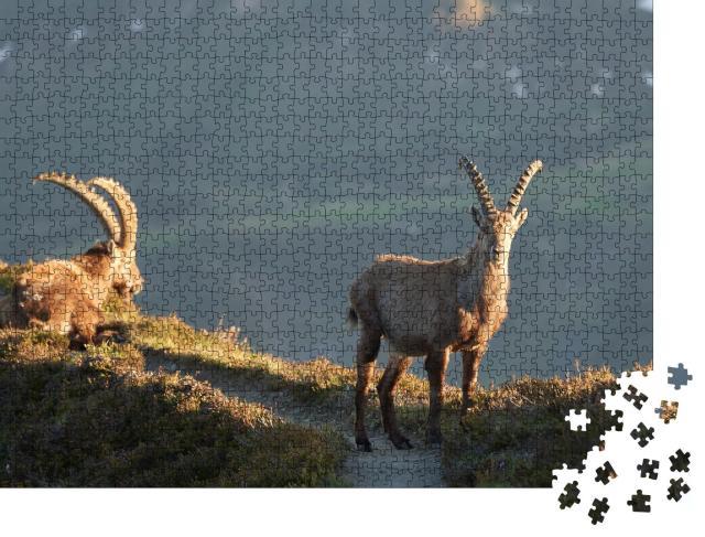 """Puzzle 1000 Teile """"Steinbock, Alpensteinbock, Capra ibex, Berg, Schweizer Alpen"""""""