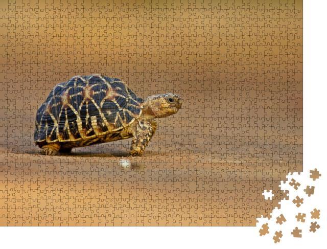 """Puzzle 1000 Teile """"Indische Sternschildkröte"""""""