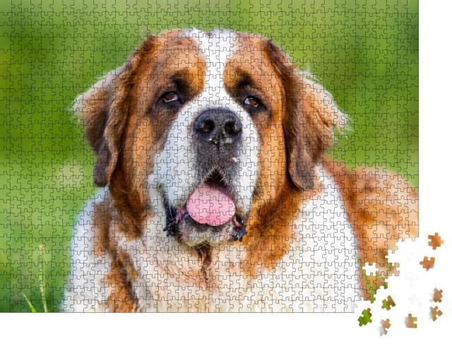 """Puzzle 1000 Teile """"Bernhardiner Hund, Bernhardiner"""""""