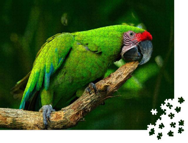 """Puzzle 1000 Teile """"Großer Grüner Ara, seltener Vogel aus Costa Rica"""""""