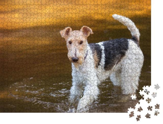 """Puzzle 1000 Teile """"Spielender Drahthaar-Foxterrier im Wasser"""""""