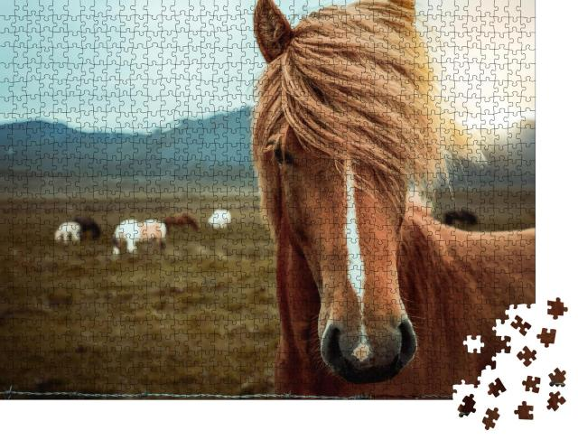 """Puzzle 1000 Teile """"Islandpferd in einer in der Natur Islands"""""""