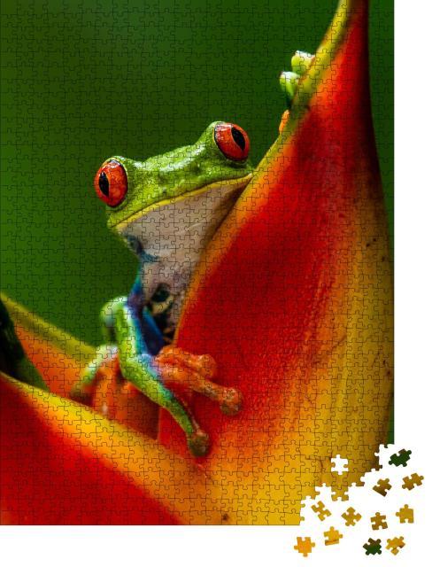 """Puzzle 1000 Teile """"Rotaugenlaubfrosch auf tropischer Blüte"""""""