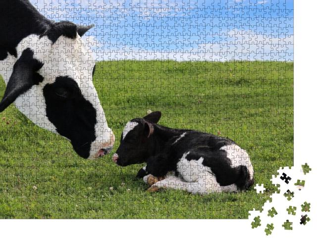 """Puzzle 1000 Teile """"Holstein-Mutterkuh mit ihrem neugeborenen Kalb"""""""