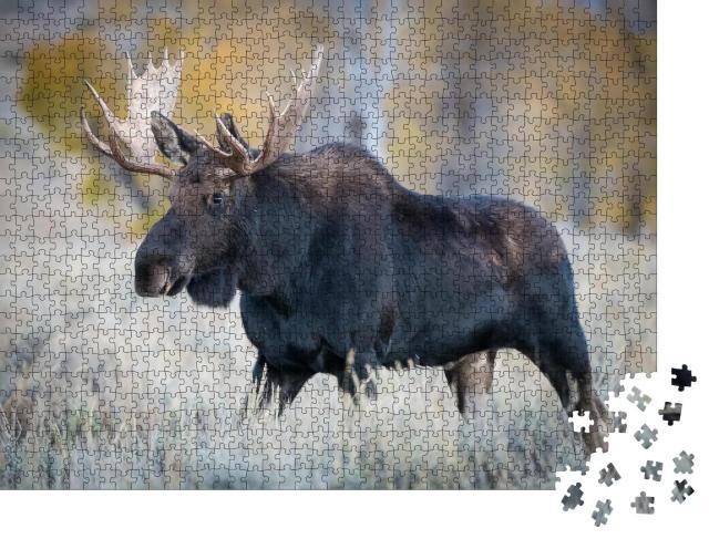 """Puzzle 1000 Teile """"Elch steht im trockenen Gras, Yellowstone, USA"""""""