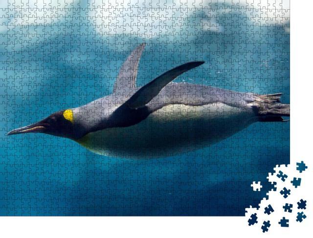 """Puzzle 1000 Teile """"Unterwasserfoto: Pinguine tauchen unter dem Eis"""""""