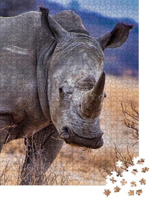 """Puzzle 1000 Teile """"Breitmaulnashorn, Khama Rhino Sanctuary, Botswana"""""""