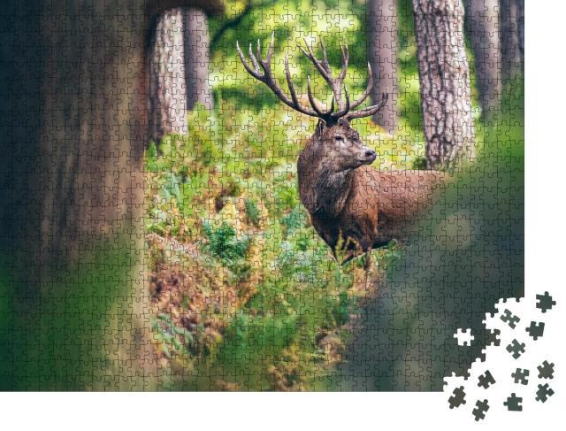 """Puzzle 1000 Teile """"Rothirsch zwischen Farnen im Herbstwald"""""""
