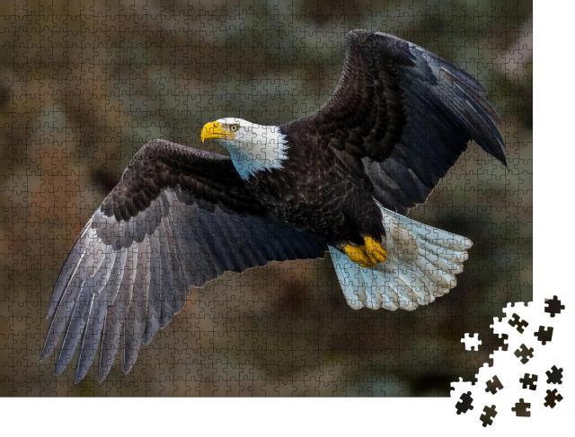 """Puzzle 1000 Teile """"Weißkopfseeadler fliegt an einem Berghang, Alaska"""""""