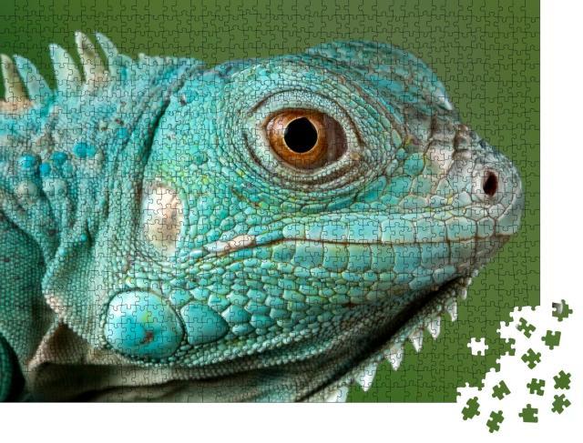 "Puzzle 1000 Teile ""Blauer Leguan: Nahaufnahme vom Kopf"""