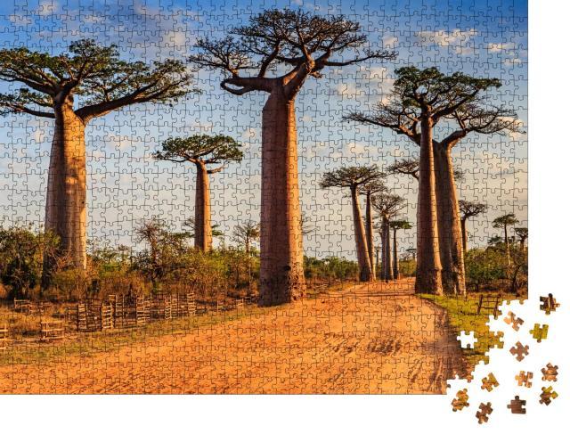 """Puzzle 1000 Teile """"Einzigartige Baobab-Bäume in der Allee der Baobabs, Madagaskar"""""""