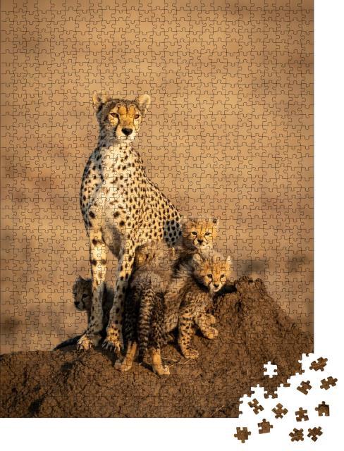 """Puzzle 1000 Teile """"Gepardenweibchens und ihrer vier kleinen Gepardenbabys"""""""