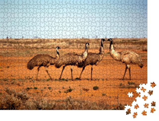 """Puzzle 1000 Teile """"Emus in freier Wildbahn, Outback New South Wales, Australien."""""""