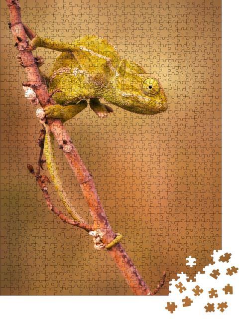 """Puzzle 1000 Teile """"Gewöhnliches Chamäleon (Chamaeleo chamaeleon)"""""""