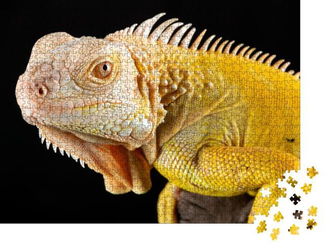 """Puzzle 1000 Teile """"Nahaufnahme eines gelben Albino-Leguans auf schwarzem Hintergrund."""""""
