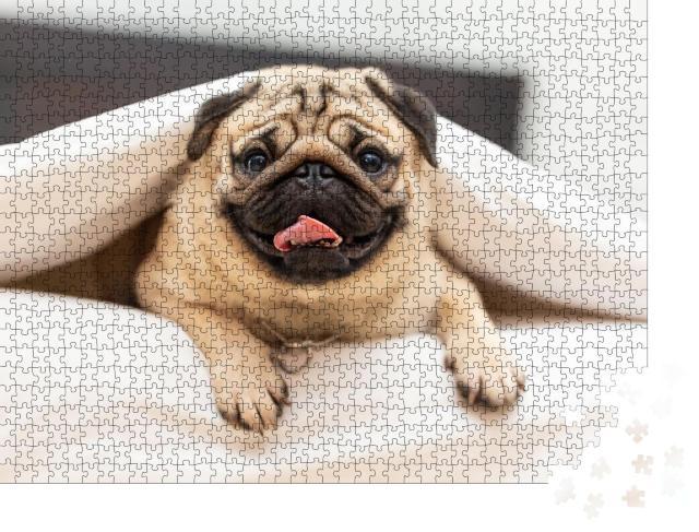 """Puzzle 1000 Teile """"Lustiger Mops unter einer kuscheligen weißen Decke"""""""