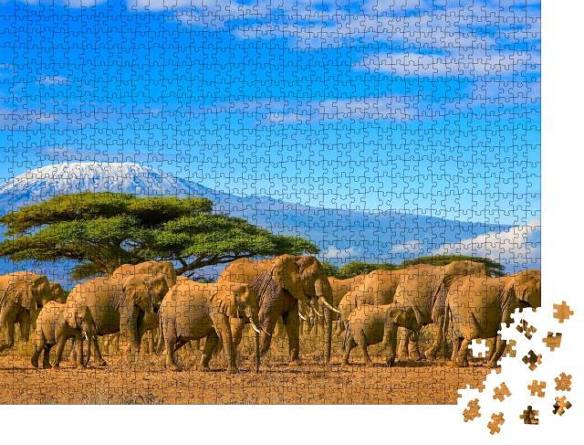 "Puzzle 1000 Teile ""Eine Herde afrikanischer Elefanten vor dem Kilimandscharo, Afrika"""