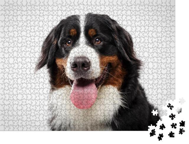 """Puzzle 1000 Teile """"Porträt eines ausdrucksstarken schwarzen Berner Sennenhundes"""""""