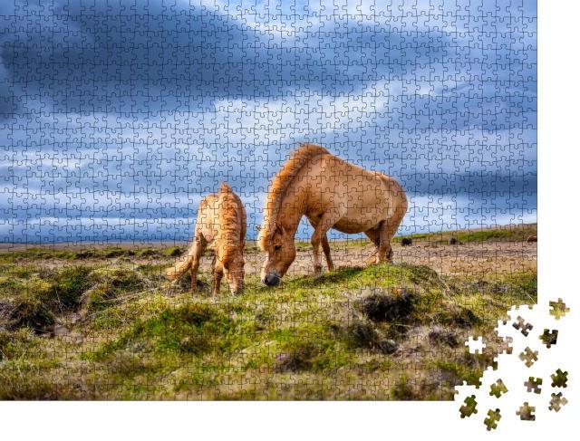 "Puzzle 1000 Teile ""Island-Pferde auf dem Westfjord in Island"""