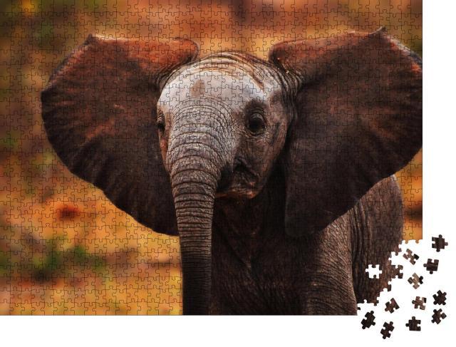 """Puzzle 1000 Teile """"Fliederbrustwalze sitzt auf einem Ast, Südafrika"""""""