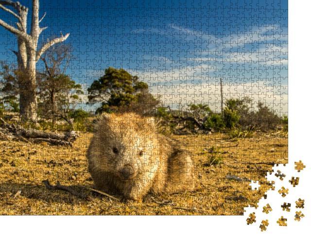 """Puzzle 1000 Teile """"Wombat beim Grasen im tasmanisch-australischen Busch"""""""