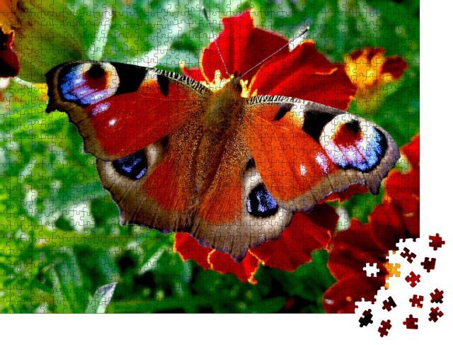 """Puzzle 1000 Teile """"Wunderschöner Schmetterling: Tagpfauenauge auf einer roten Blüte"""""""
