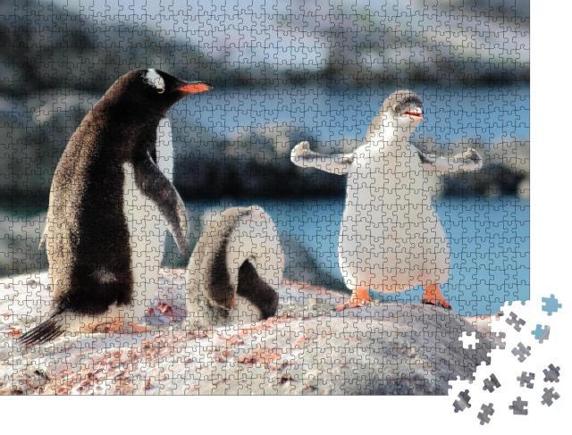 """Puzzle 1000 Teile """"Wer ist der stärkste Pinguin?"""""""