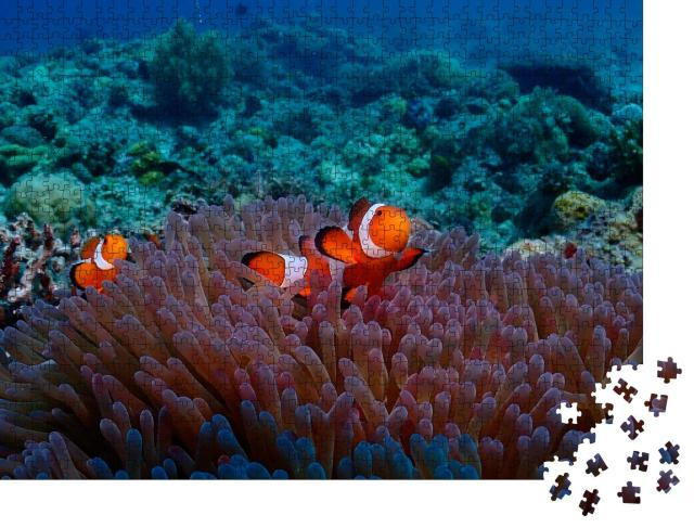 """Puzzle 1000 Teile """"Anemonenfisch vom Tauchplatz Malapascua"""""""