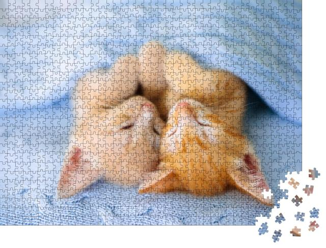 """Puzzle 1000 Teile """"Zwei schlafende Katzenbabys unter einer kuscheligen blauen Decke"""""""