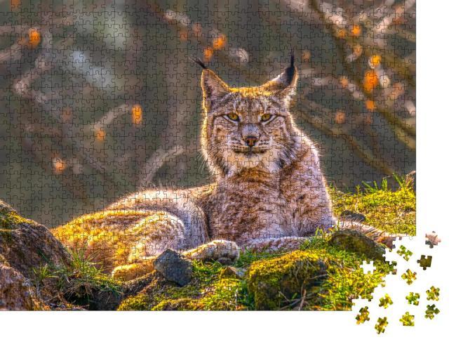 """Puzzle 1000 Teile """"Wunderschöner junger Luchs in der Wildnis des Waldes"""""""