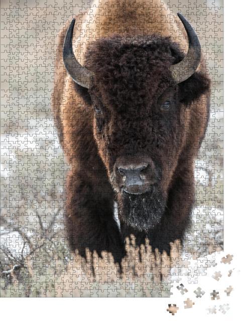 "Puzzle 1000 Teile ""Bison, Büffel"""