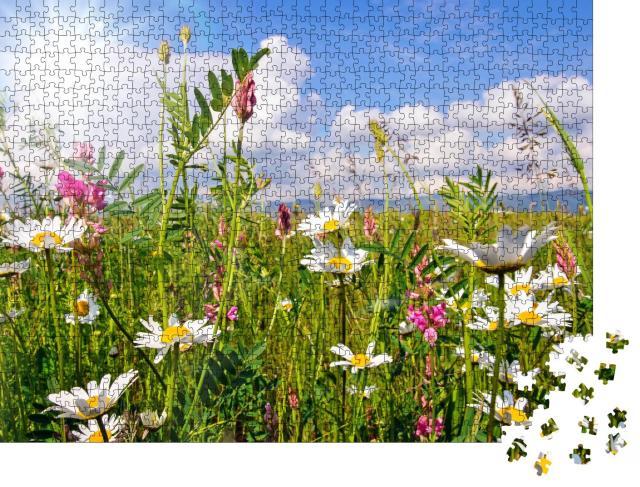 """Puzzle 1000 Teile """"Blumenwiese im Sommer mit hellen Gänseblümchen"""""""