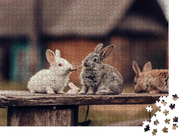 """Puzzle 1000 Teile """"Zwei Kaninchen mümmeln Löwenzahn"""""""