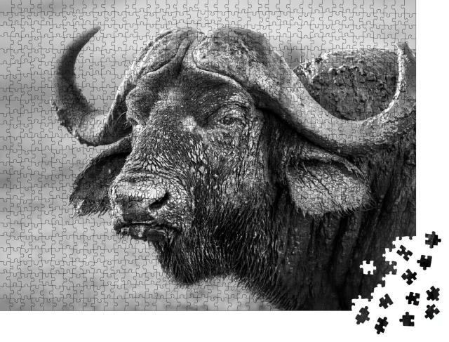 """Puzzle 1000 Teile """"Mit Schlamm bedeckter Büffel, Südafrika"""""""