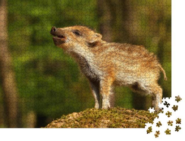 """Puzzle 1000 Teile """"Süßes gestreiftes Wildschweinbaby im Wald, Frischling"""""""
